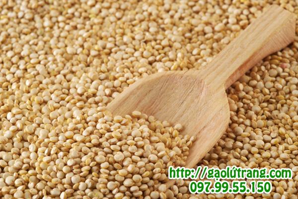 Hạt diêm mạch (quinoa) công dụng và cách dùng